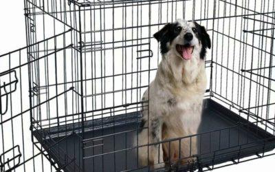 Kan du ta med hundebur på danskebåten?